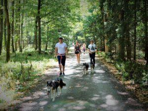 Husky Wanderung mit Siberian Husky im Waldviertel